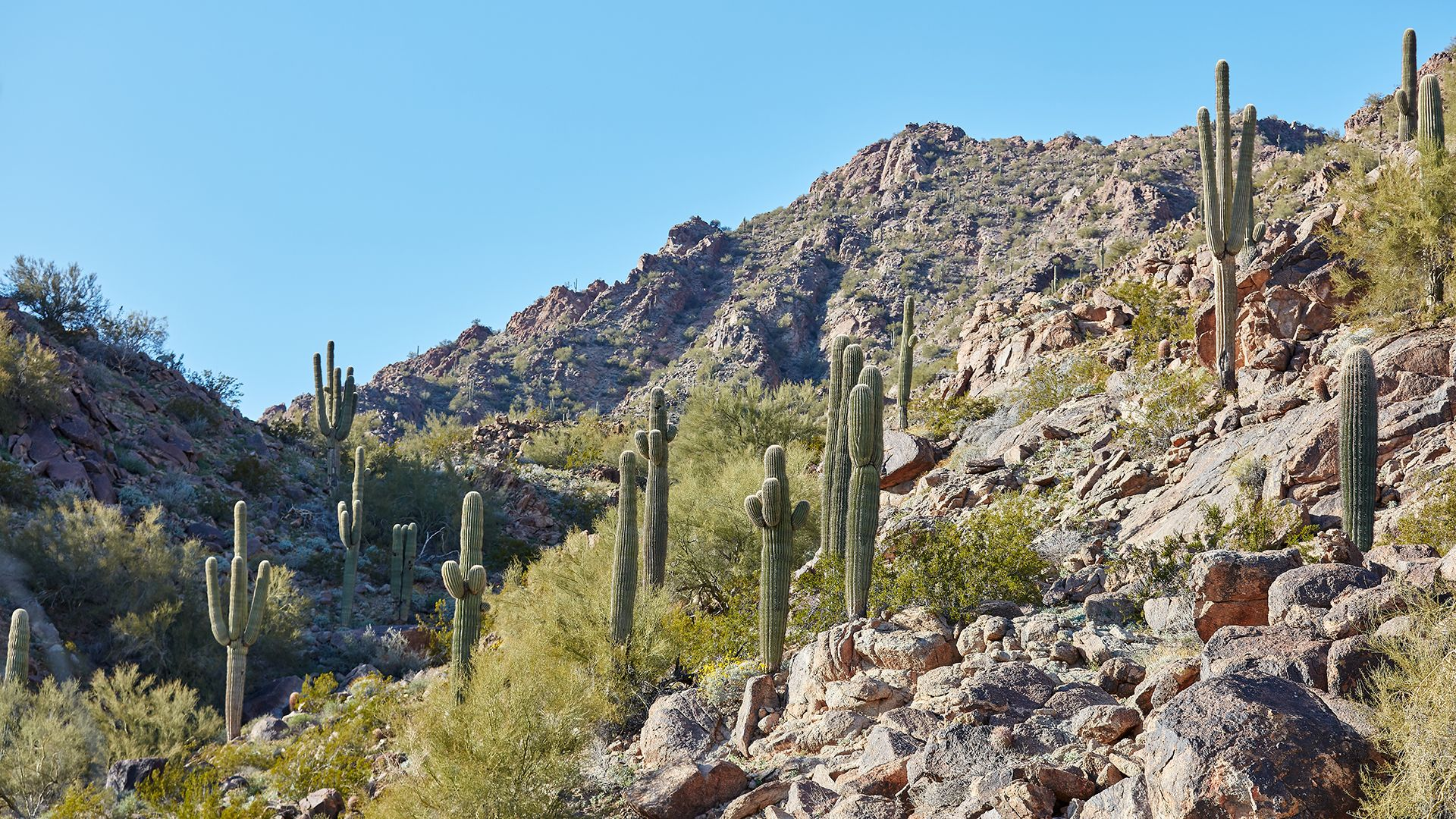 Observe the desert's wild flora and fauna, and details of the landscape's natural formations.