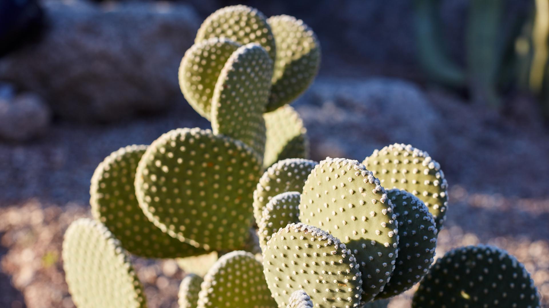 Take a relaxed stroll through the desert landscape along the Cactus Garden trail.