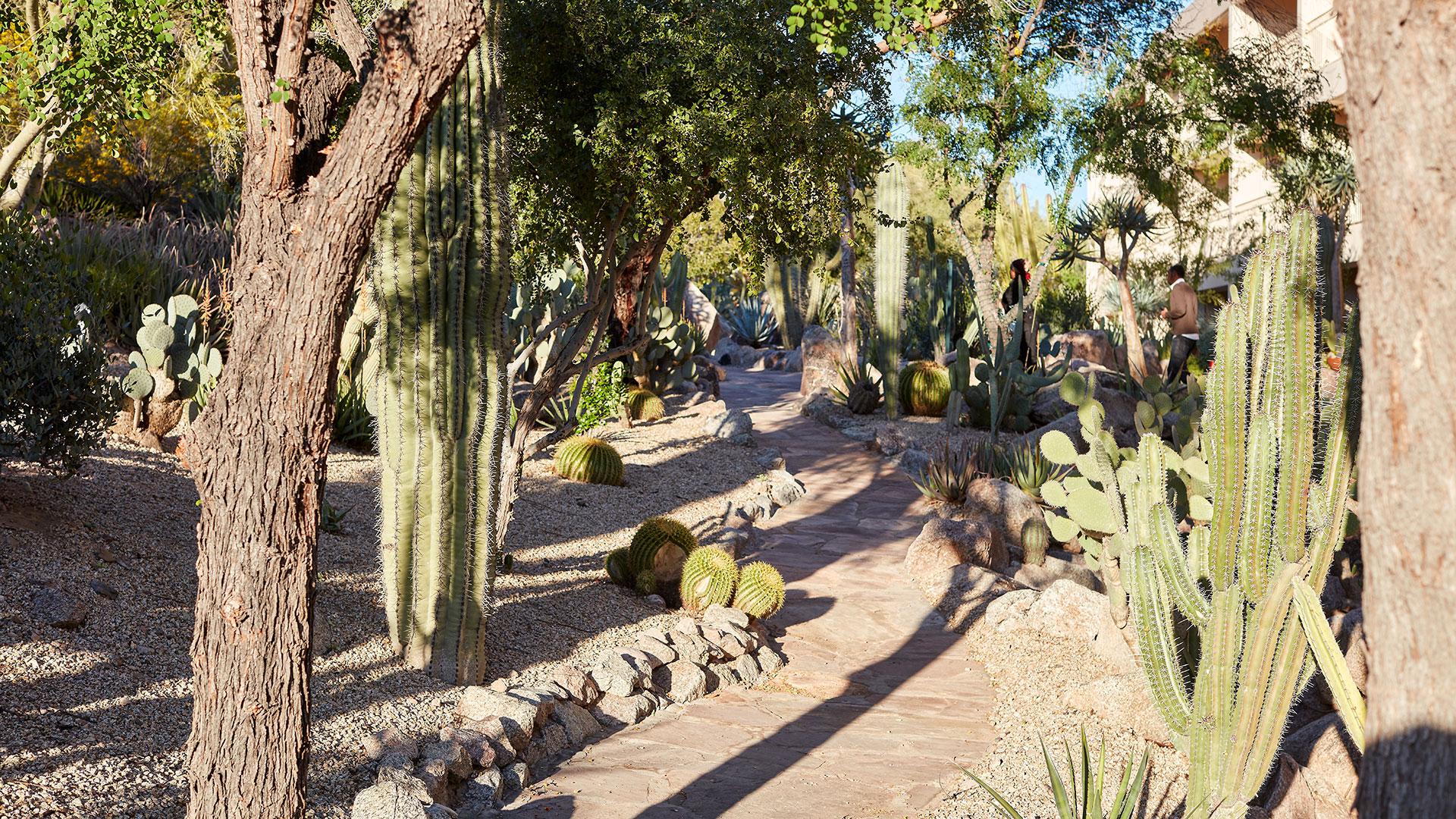 Patios overlook the Cactus Garden and provide views of Camelback Mountain's flora and fauna